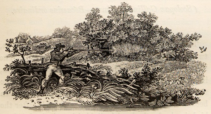 Shooting_from_Hide_tail-piece_in_Bewick_British_Birds_1804