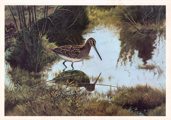 snipe-painting